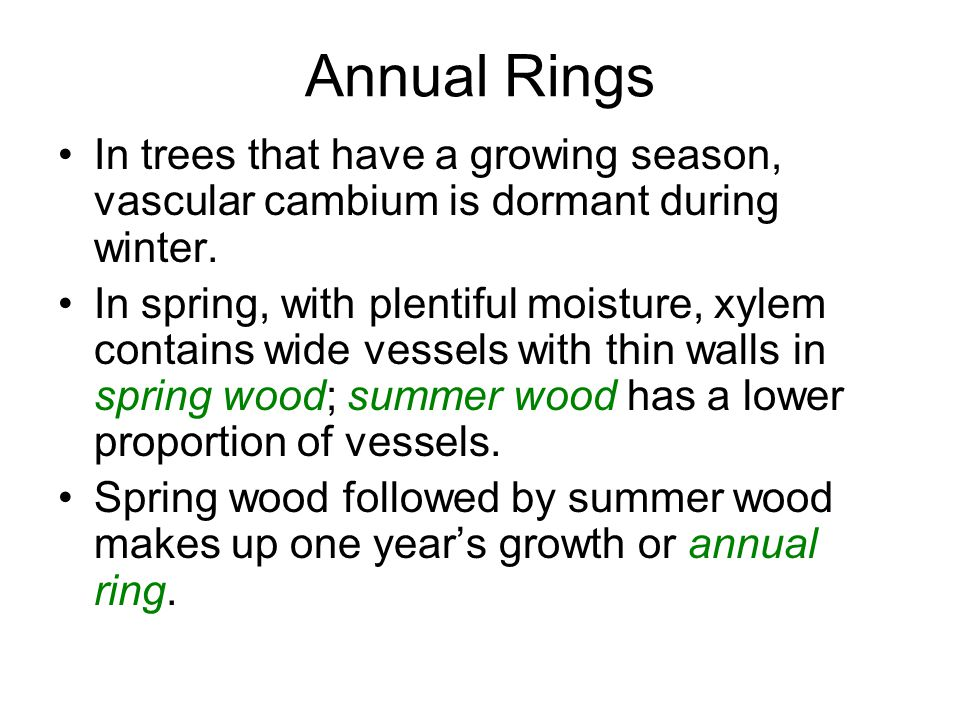 Annual Rings In trees that have a growing season, vascular cambium is dormant during winter.
