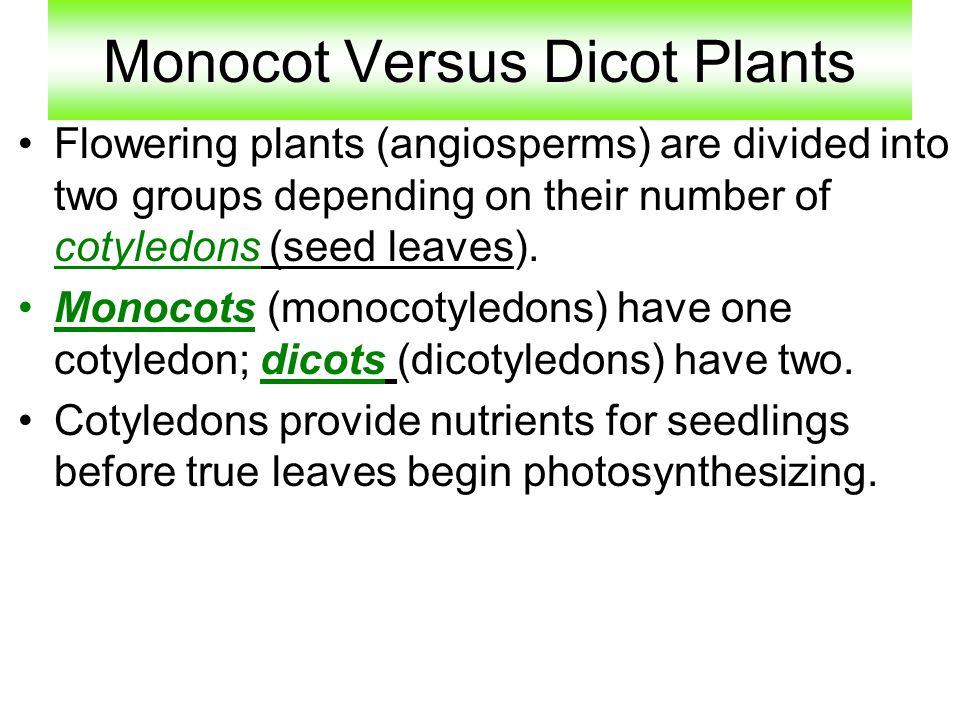 Monocot Versus Dicot Plants