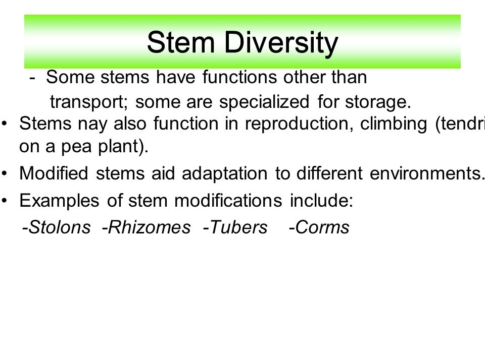 Stem Diversity Stem Diversity - Some stems have functions other than