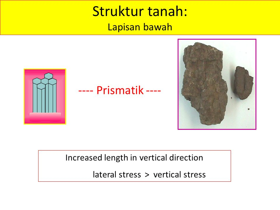 Struktur tanah: ---- Prismatik ---- Lapisan bawah