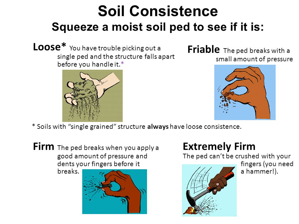 Squeeze a moist soil ped to see if it is: