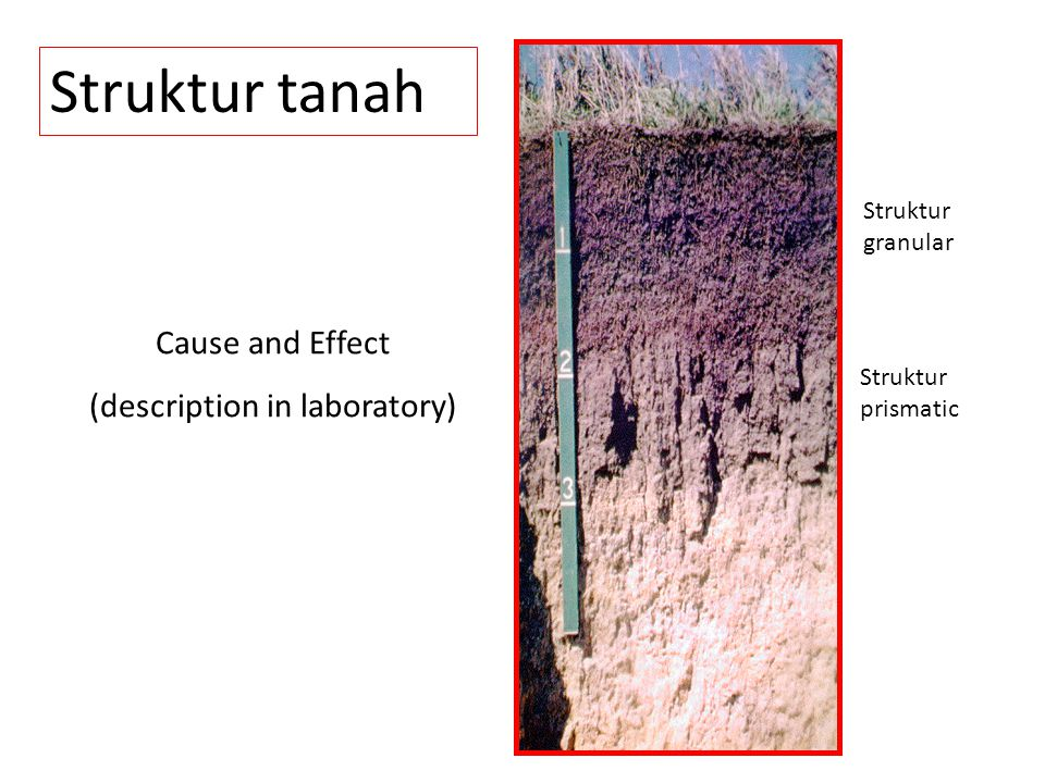 (description in laboratory)