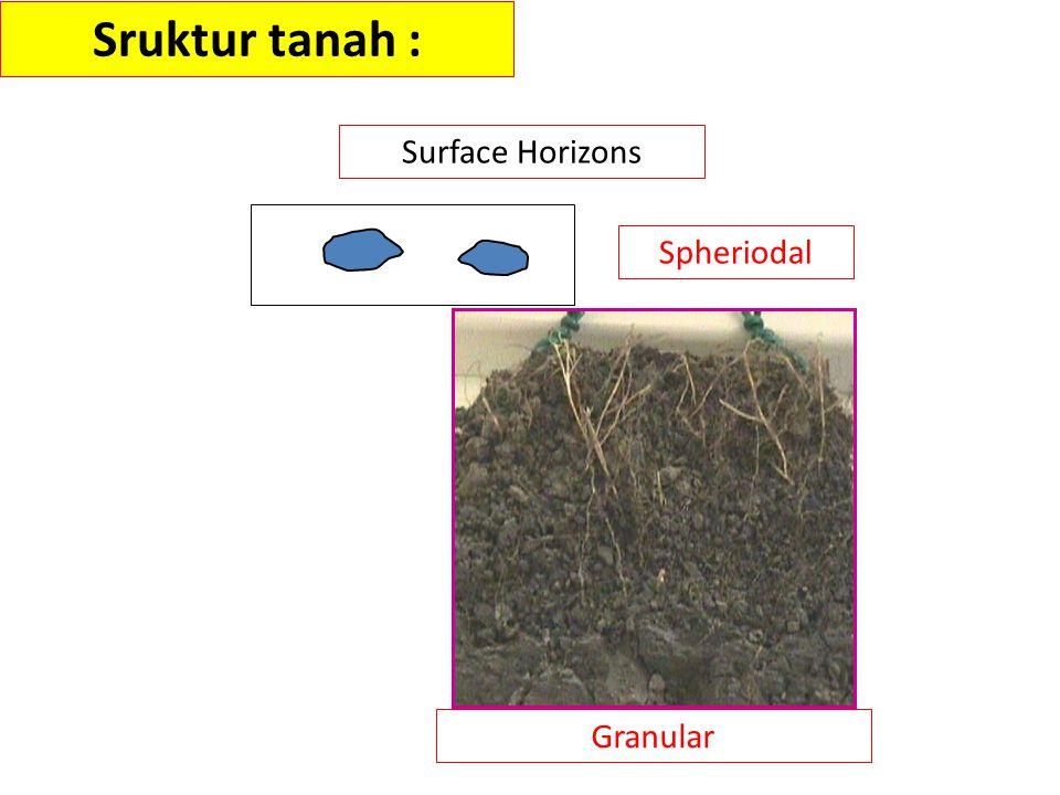 Sruktur tanah : Surface Horizons Spheriodal Granular