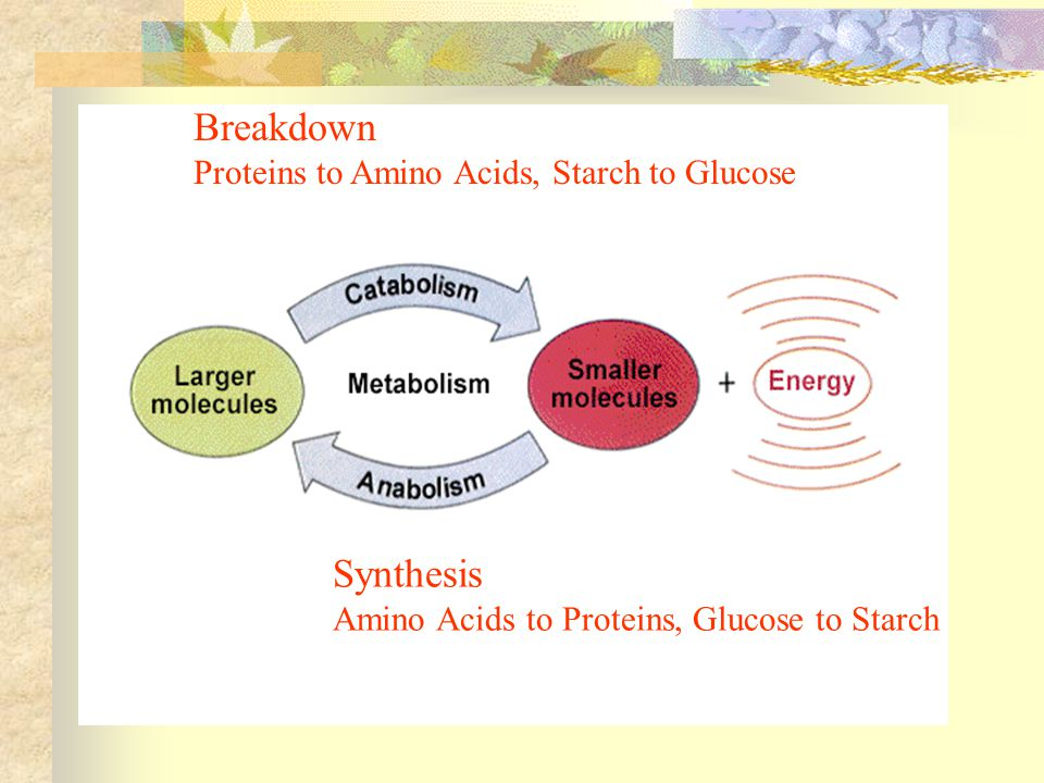 Breakdown Synthesis Proteins to Amino Acids, Starch to Glucose