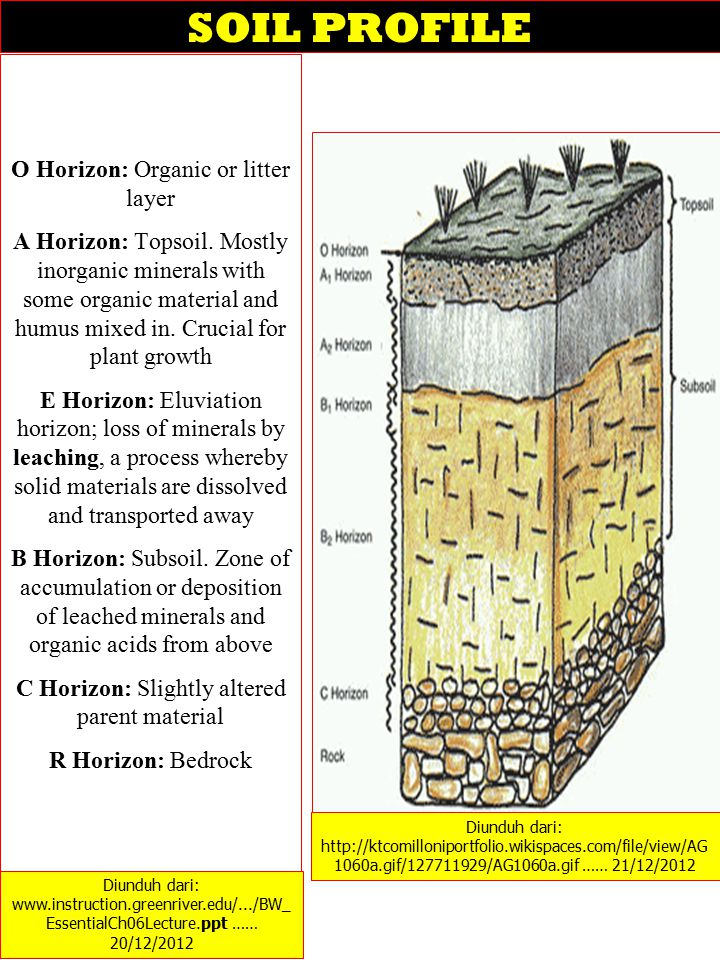 SOIL PROFILE O Horizon: Organic or litter layer