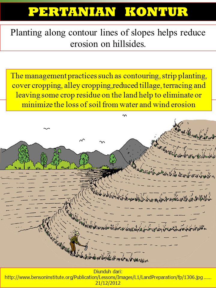 PERTANIAN KONTUR Planting along contour lines of slopes helps reduce erosion on hillsides.