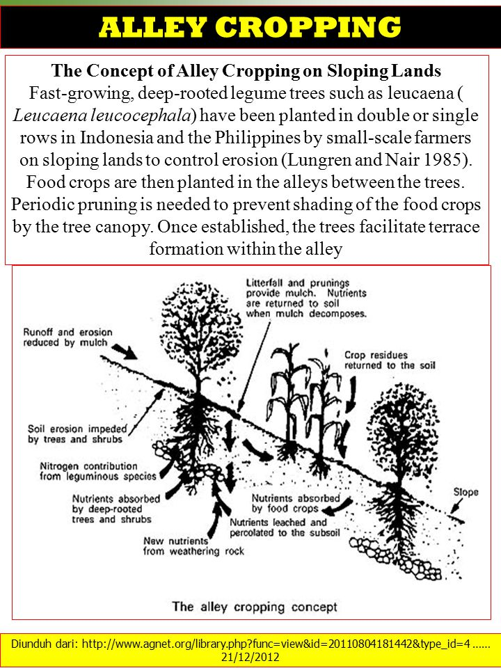 The Concept of Alley Cropping on Sloping Lands
