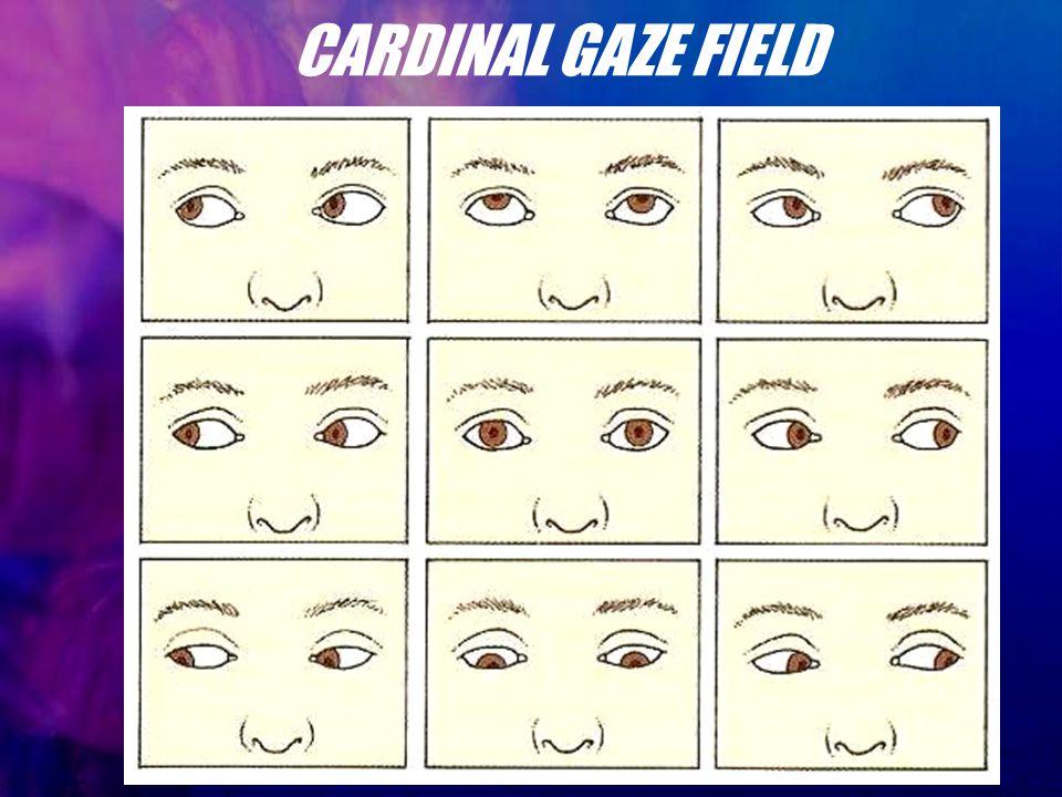 CARDINAL GAZE FIELD