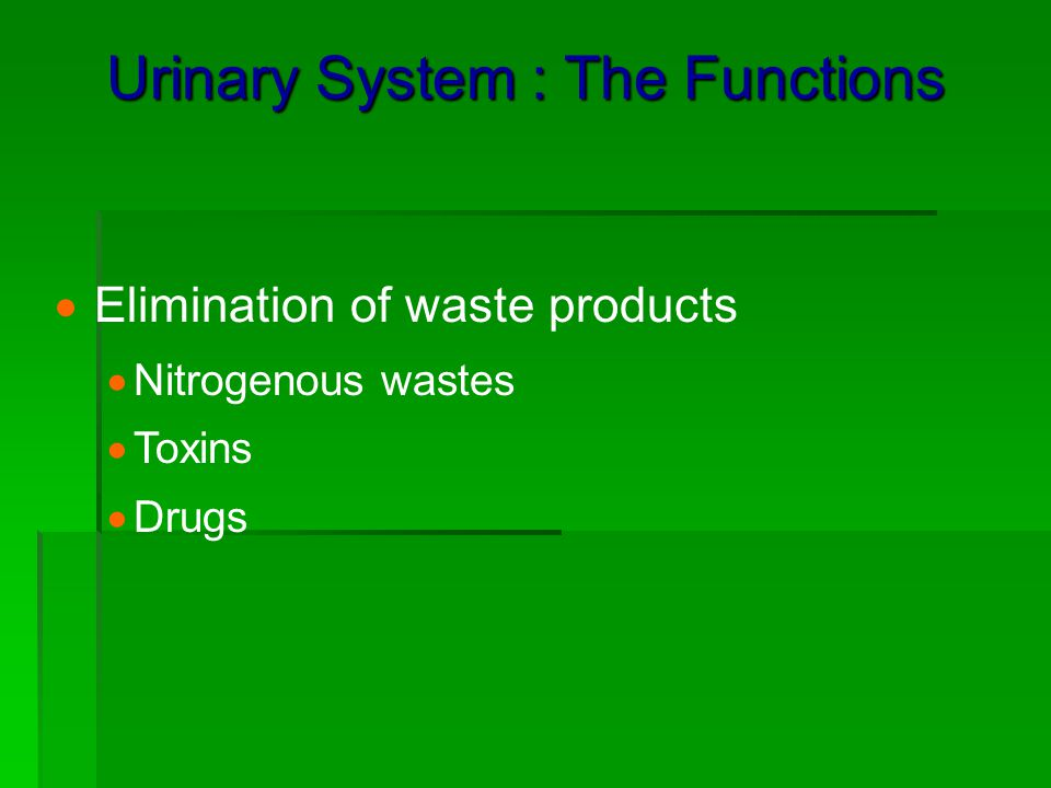 Urinary System : The Functions