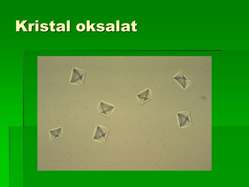 Kristal oksalat
