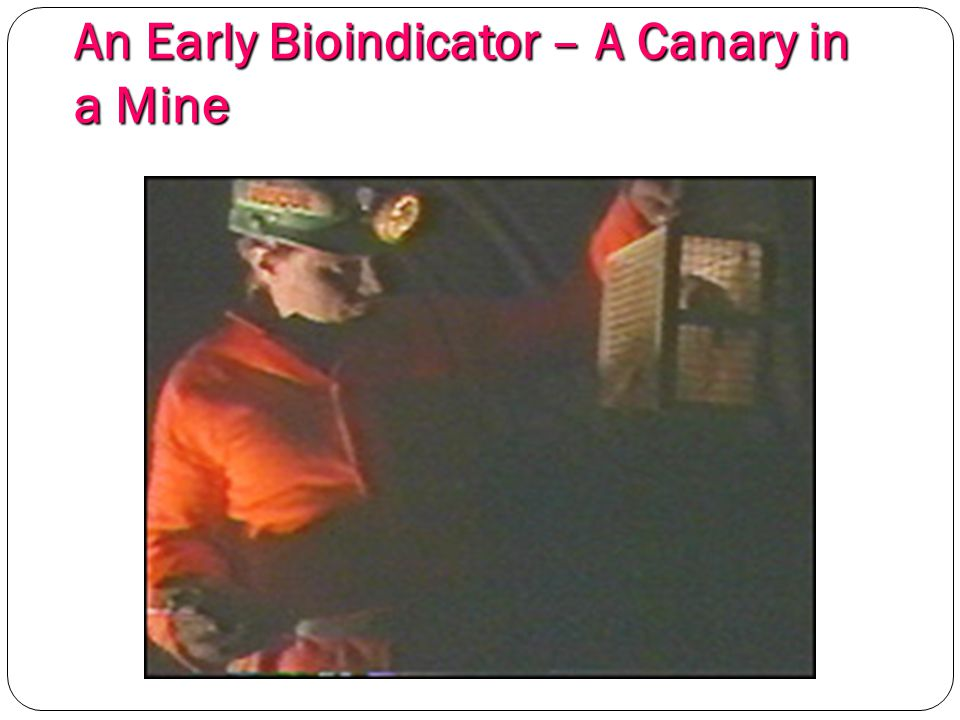 An Early Bioindicator – A Canary in a Mine