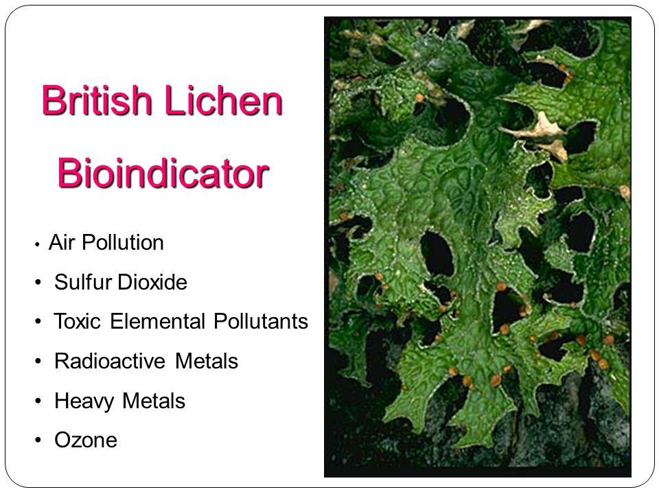 British Lichen Bioindicator Sulfur Dioxide Toxic Elemental Pollutants