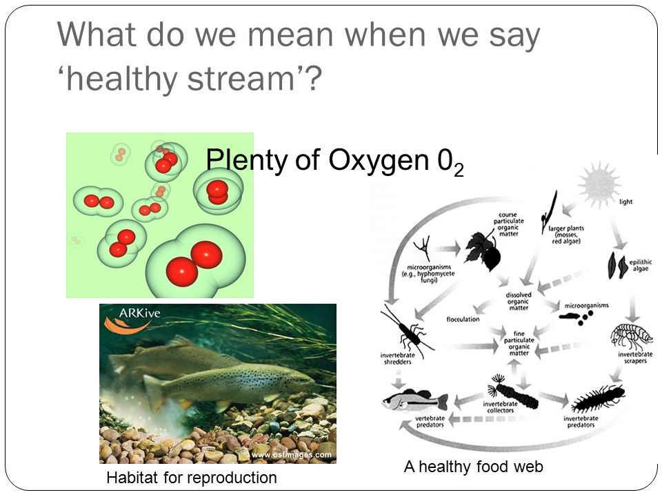 What do we mean when we say 'healthy stream'