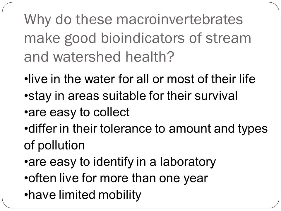 Why do these macroinvertebrates make good bioindicators of stream and watershed health