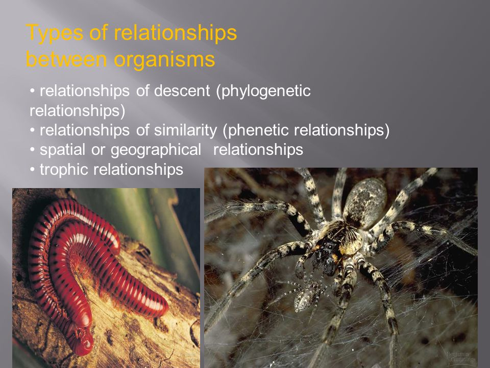 Types of relationships between organisms