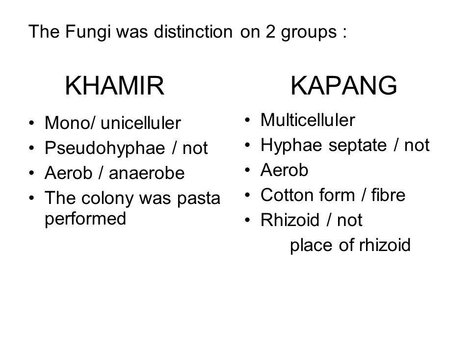 The Fungi was distinction on 2 groups : KHAMIR KAPANG