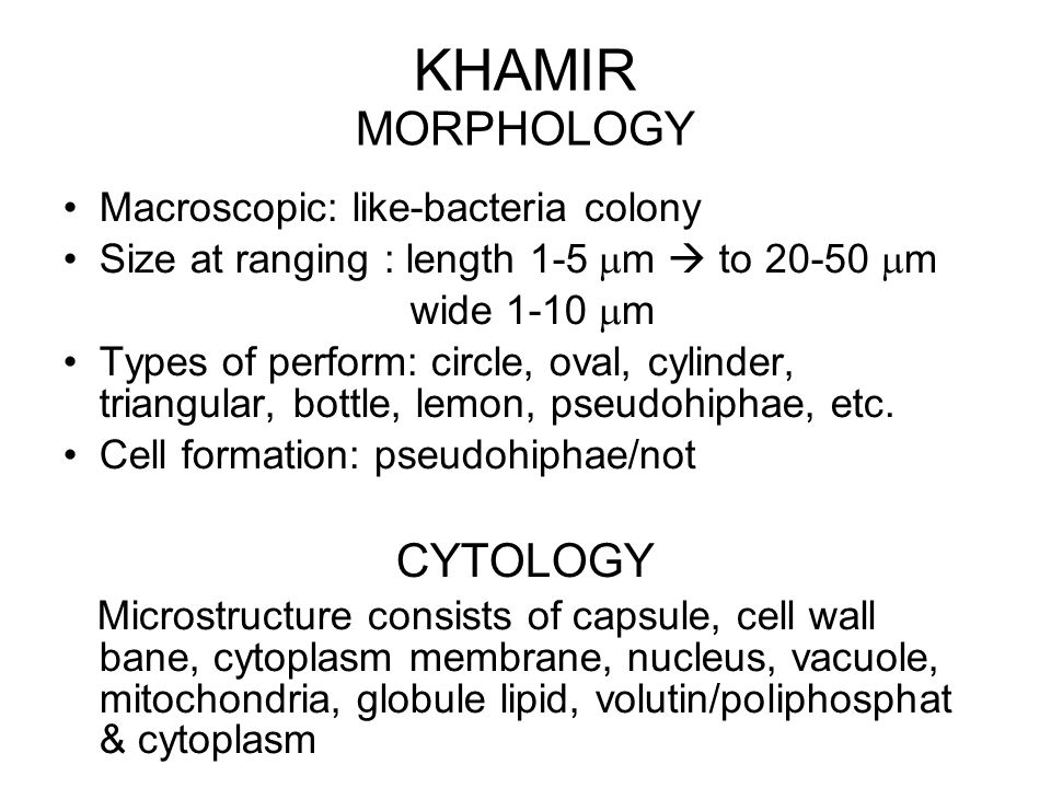 KHAMIR MORPHOLOGY CYTOLOGY Macroscopic: like-bacteria colony