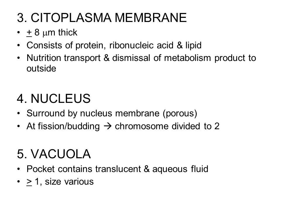 3. CITOPLASMA MEMBRANE 4. NUCLEUS 5. VACUOLA + 8 m thick