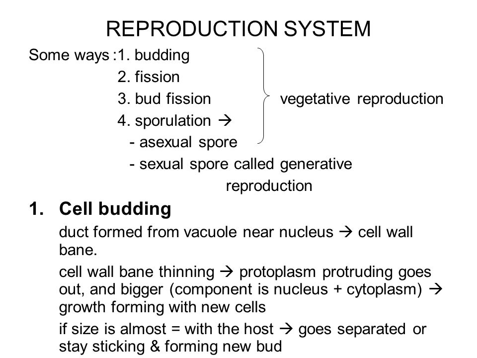 REPRODUCTION SYSTEM Cell budding Some ways :1. budding 2. fission