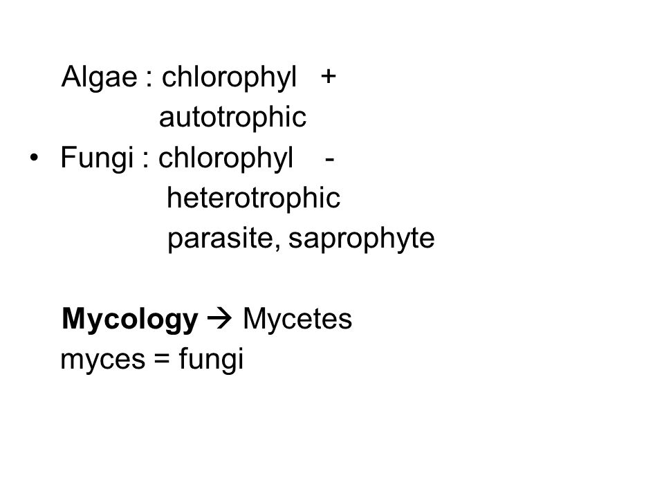 Algae : chlorophyl + autotrophic. Fungi : chlorophyl - heterotrophic. parasite, saprophyte.