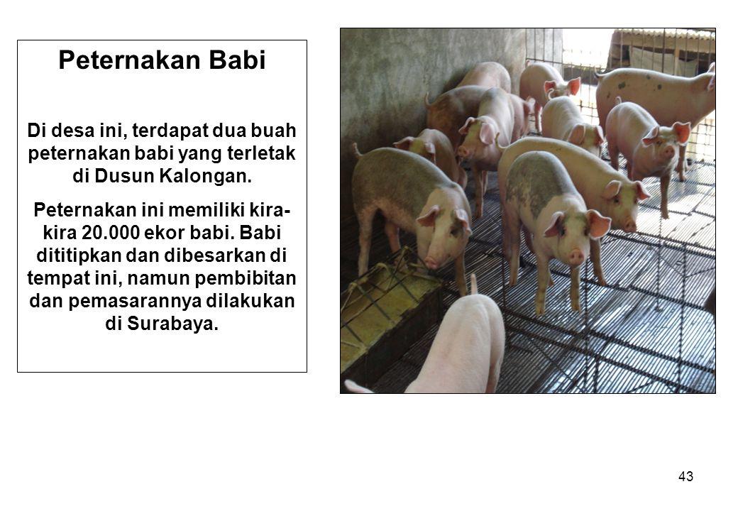 Peternakan Babi Di desa ini, terdapat dua buah peternakan babi yang terletak di Dusun Kalongan.