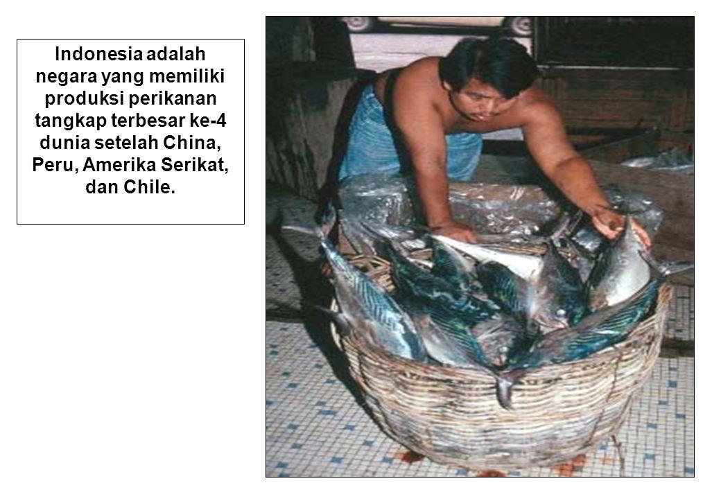 Indonesia adalah negara yang memiliki produksi perikanan tangkap terbesar ke-4 dunia setelah China, Peru, Amerika Serikat, dan Chile.