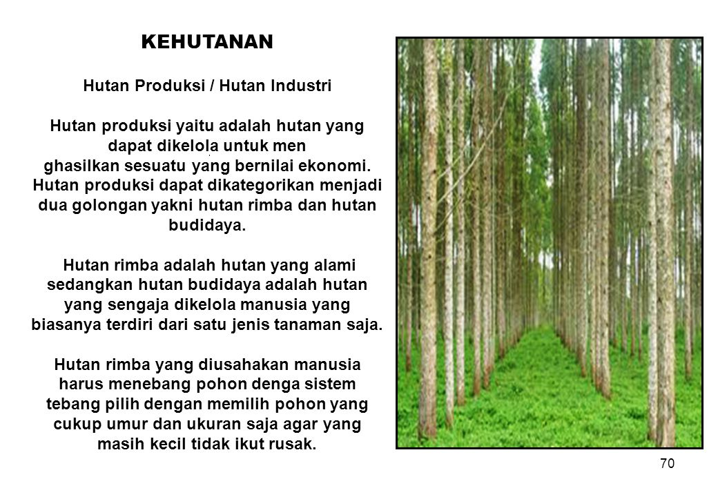 KEHUTANAN Hutan Produksi / Hutan Industri