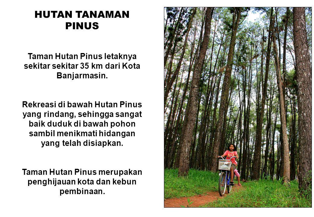 Taman Hutan Pinus merupakan penghijauan kota dan kebun pembinaan.