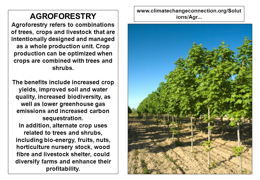 www.climatechangeconnection.org/Solutions/Agr... AGROFORESTRY.