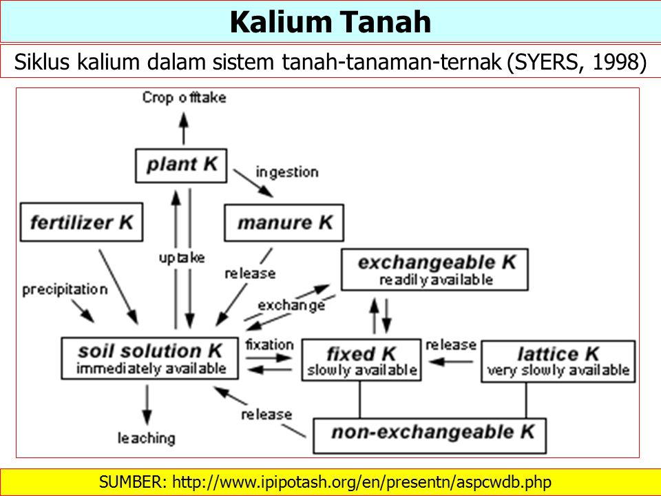 Kalium Tanah Siklus kalium dalam sistem tanah-tanaman-ternak (SYERS, 1998) SUMBER: http://www.ipipotash.org/en/presentn/aspcwdb.php 