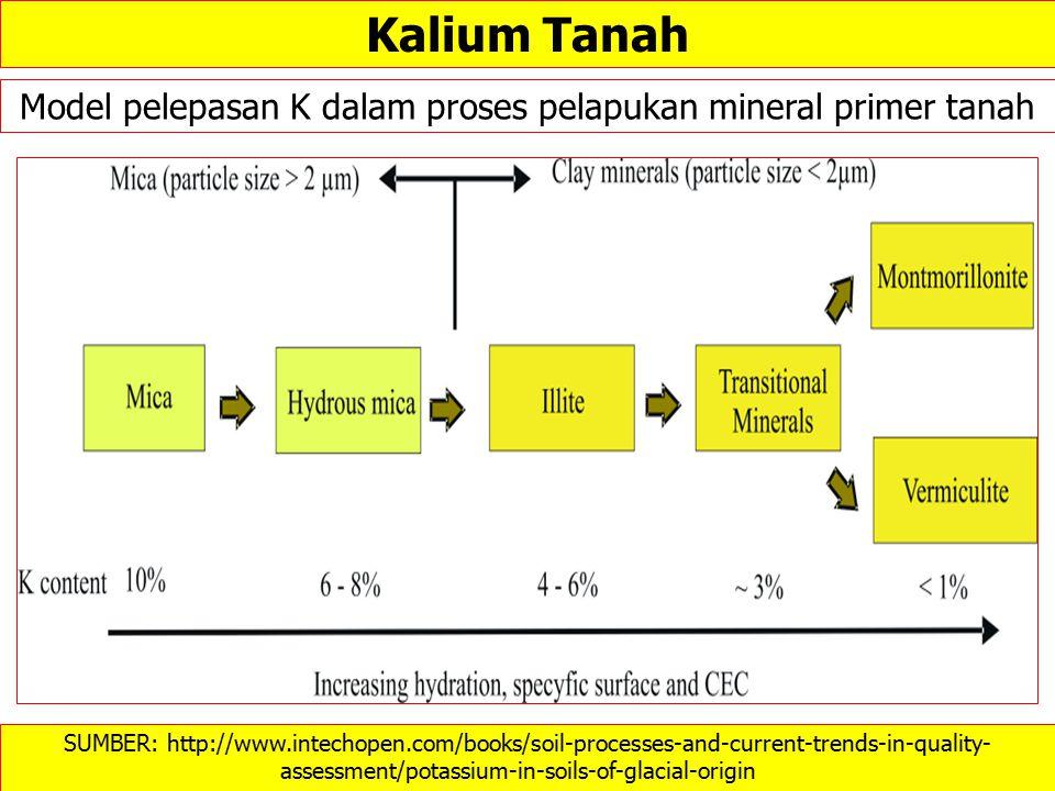 Model pelepasan K dalam proses pelapukan mineral primer tanah