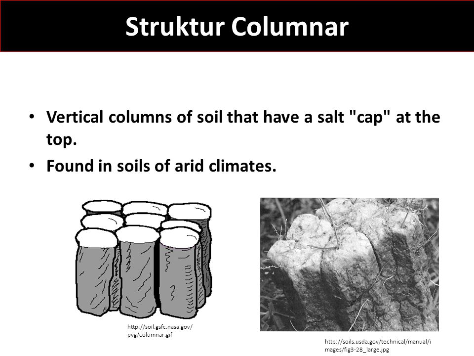 Struktur Columnar Vertical columns of soil that have a salt cap at the top. Found in soils of arid climates.