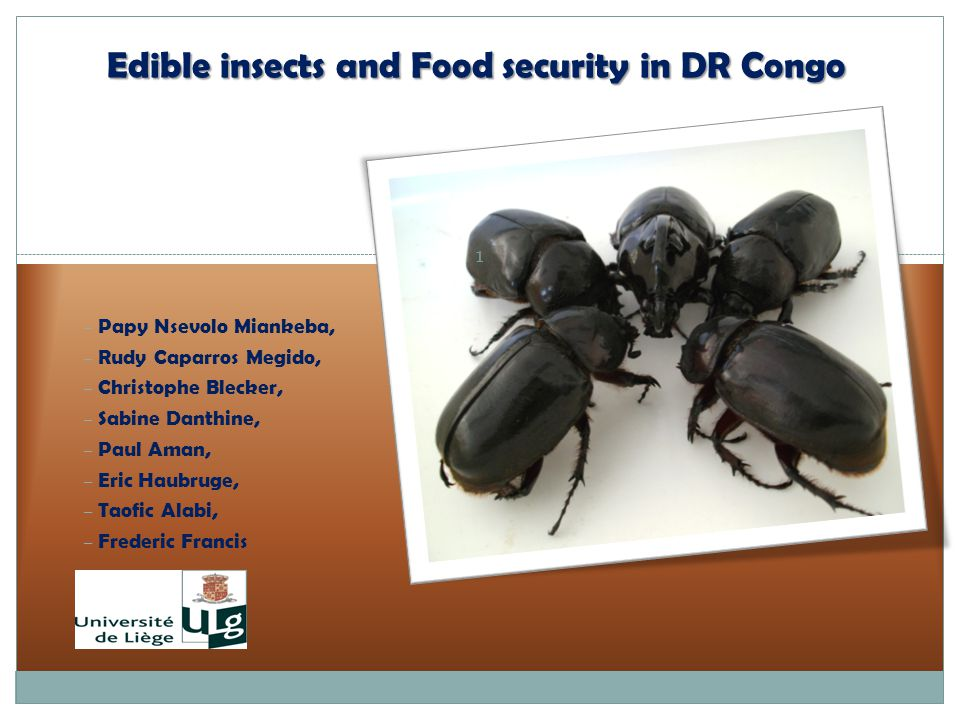 Edible insects and Food security in DR Congo