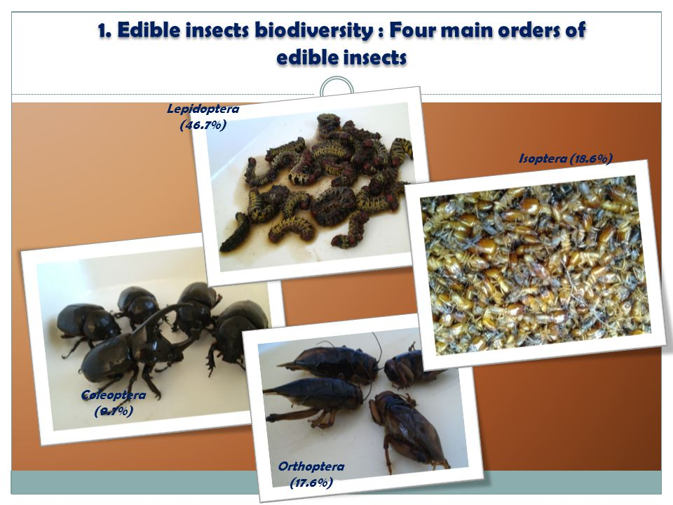1. Edible insects biodiversity : Four main orders of edible insects