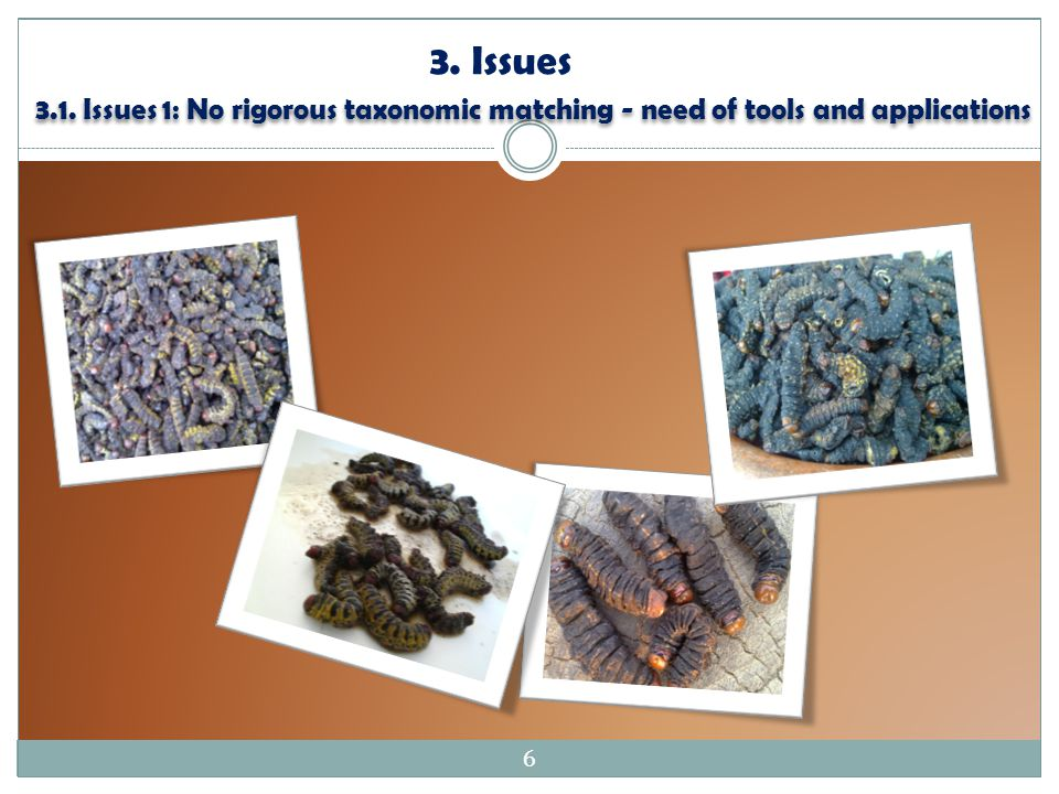 3. Issues 3.1. Issues 1: No rigorous taxonomic matching - need of tools and applications