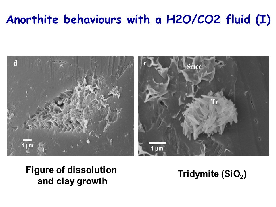 Anorthite behaviours with a H2O/CO2 fluid (I)