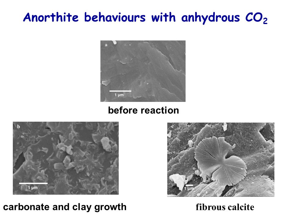 Anorthite behaviours with anhydrous CO2
