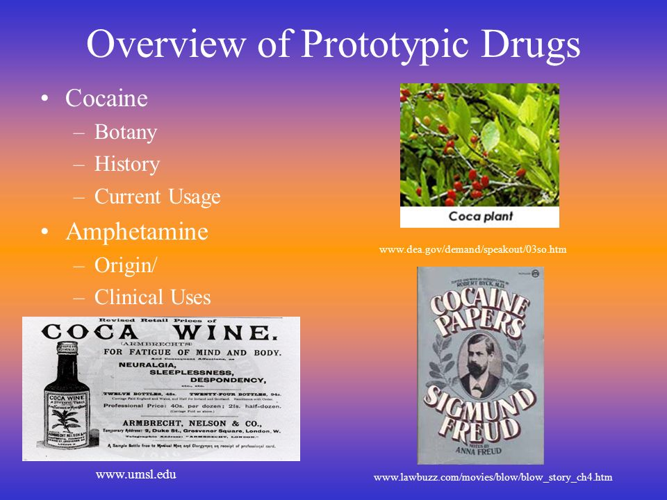 Overview of Prototypic Drugs