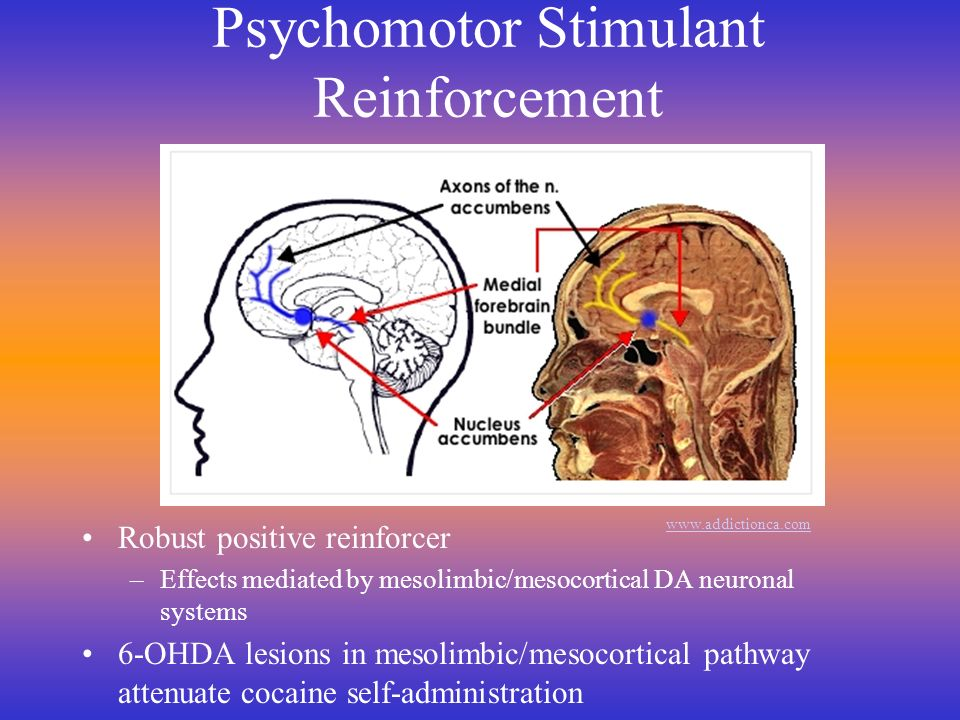 Psychomotor Stimulant Reinforcement