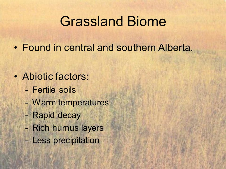 Grassland Biome Found in central and southern Alberta.