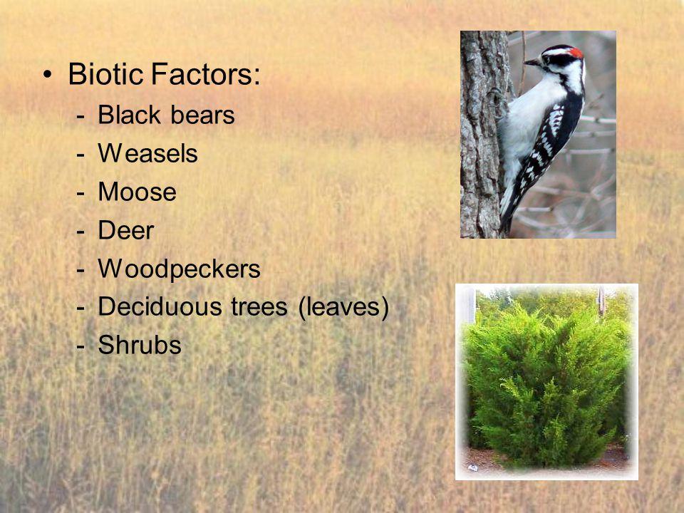 Biotic Factors: Black bears Weasels Moose Deer Woodpeckers