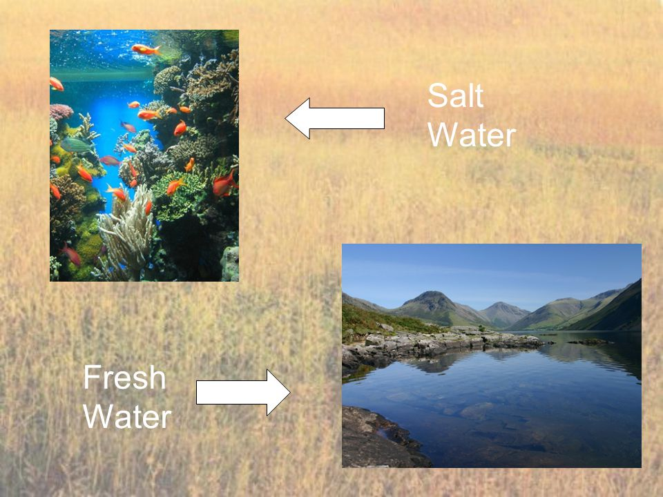 Salt Water Fresh Water