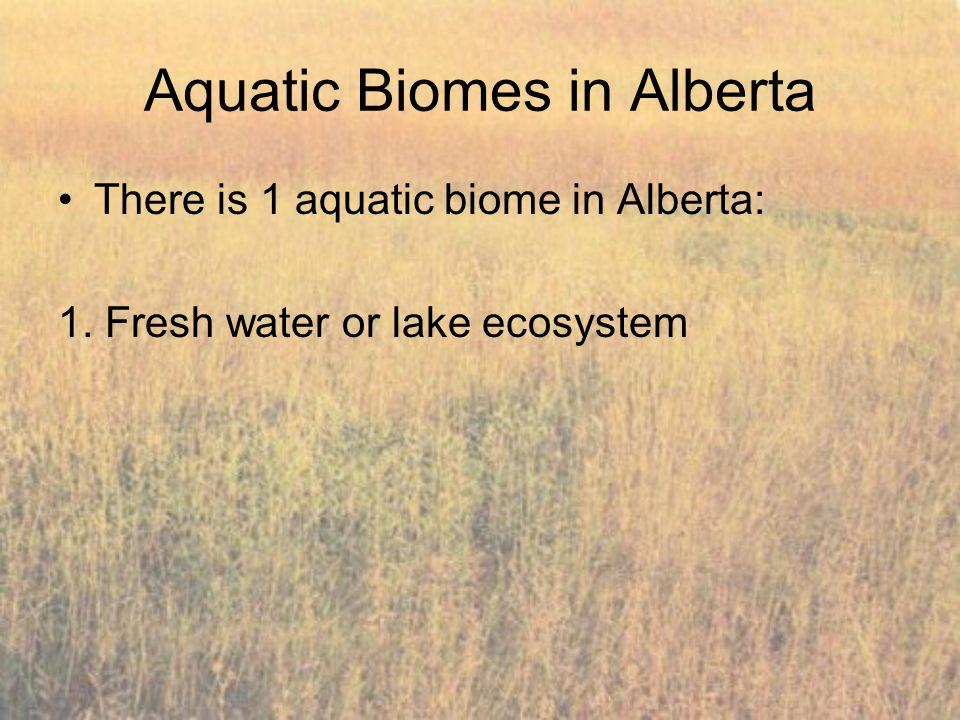 Aquatic Biomes in Alberta