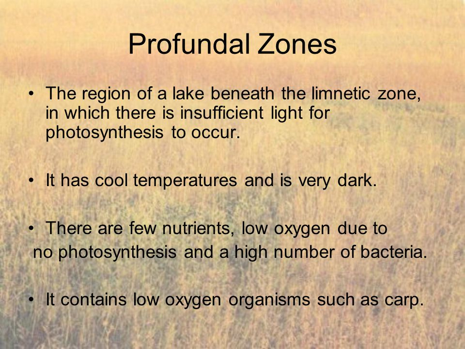 Profundal Zones The region of a lake beneath the limnetic zone, in which there is insufficient light for photosynthesis to occur.