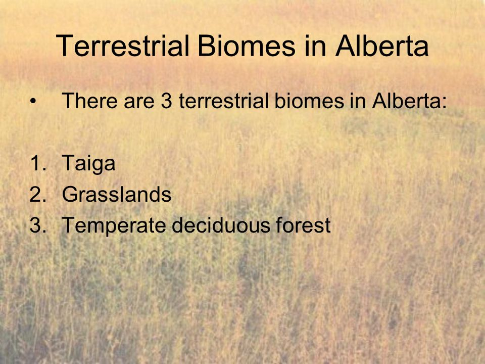 Terrestrial Biomes in Alberta