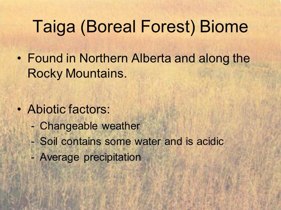 Taiga (Boreal Forest) Biome
