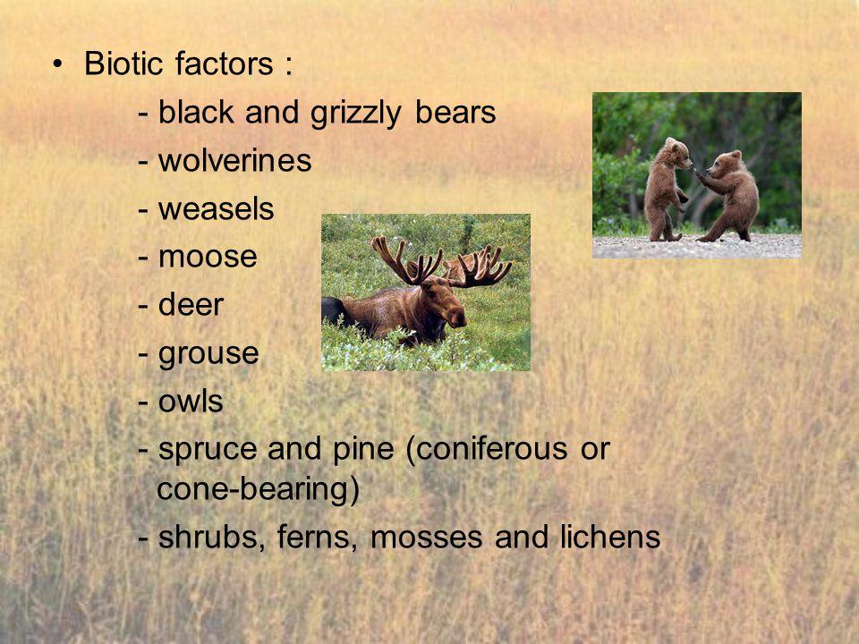Biotic factors : - black and grizzly bears. - wolverines. - weasels. - moose. - deer. - grouse.