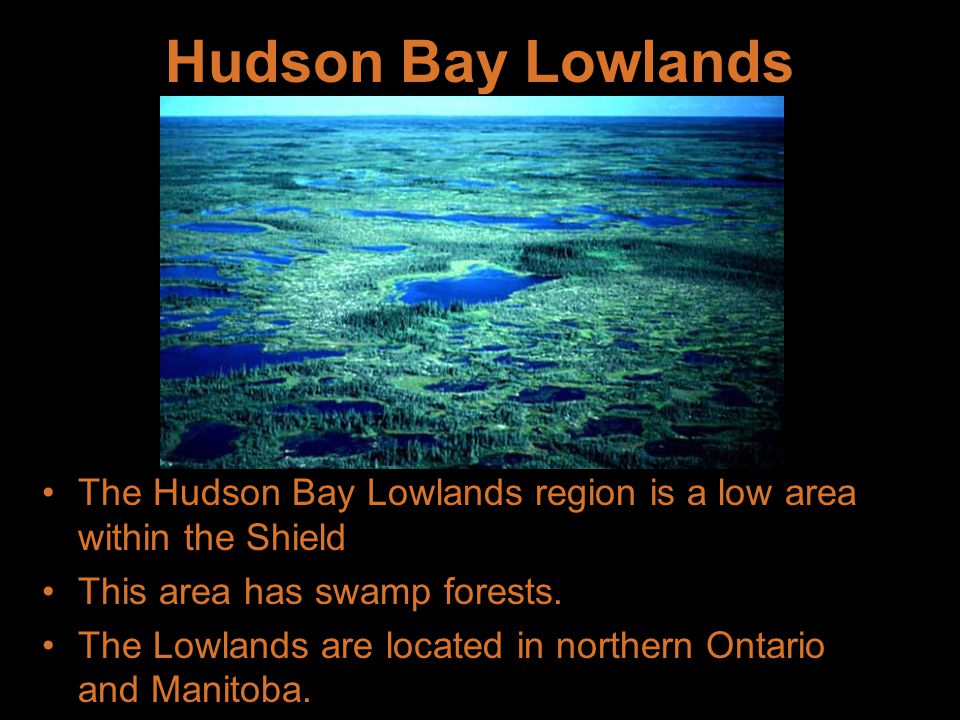 Hudson Bay Lowlands The Hudson Bay Lowlands region is a low area within the Shield. This area has swamp forests.