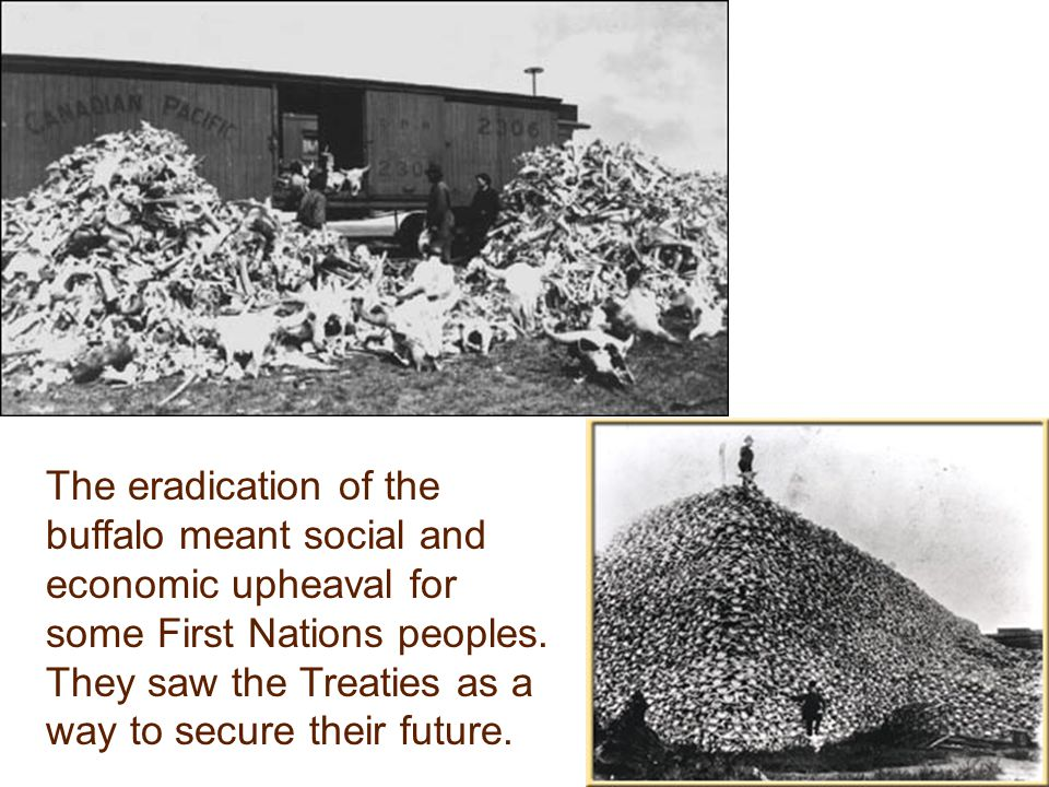 The eradication of the buffalo meant social and economic upheaval for some First Nations peoples.