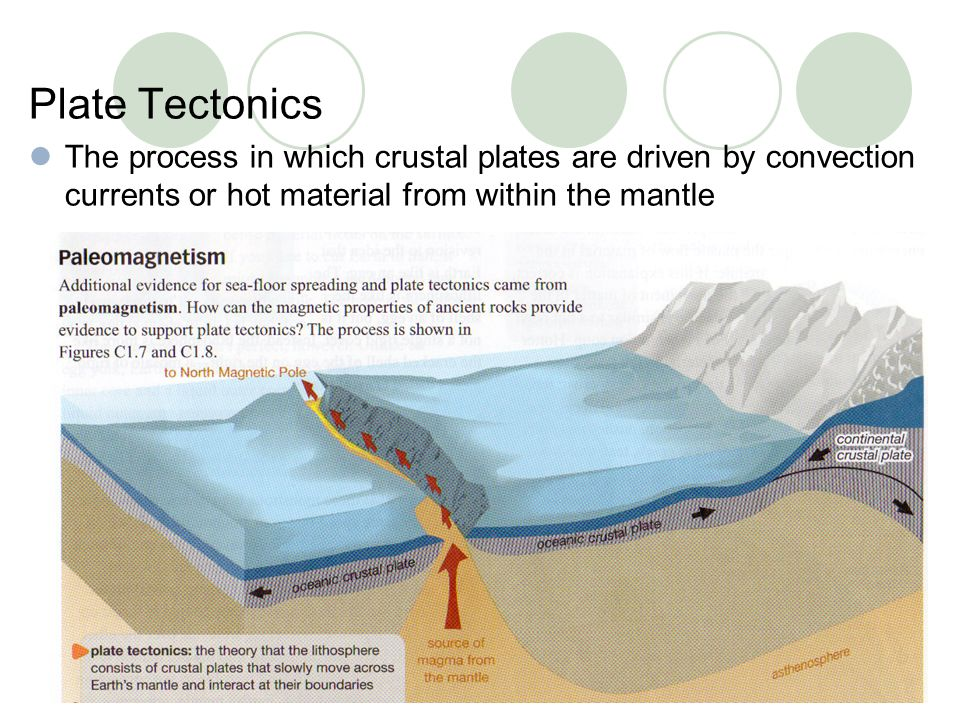 Plate Tectonics The process in which crustal plates are driven by convection currents or hot material from within the mantle.